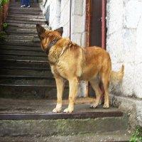 """Из серии """"Ялтинские собаки"""" :: татьяна"""
