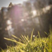 По траве непришедшего лета... :: Татьяна Шторм