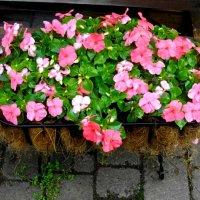 О цветах :: Натали Пам
