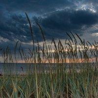 На берегу белого моря :: Павел Харлин