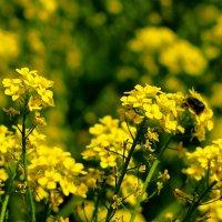 майское цветение 4 :: Александр Прокудин