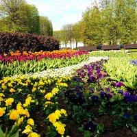 Цветы, цветы... :: Tatjana