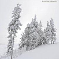 Зима в Карпатах... :: Андрей Зелёный