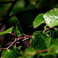 Льют дожди,только светел луч. :: Валерия  Полещикова