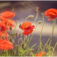 Эти теплые майские деньки :: Антон Сологубов