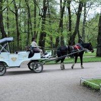Парк в Павловске. Россия. :: Валерий Подорожный