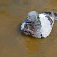 купание :: linnud