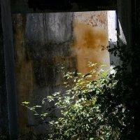 Заброшенный дом :: Людмила Синицына