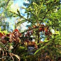 Под маленькими елочками - маленькие подарочки :: Роман Воронцов