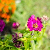 Цветок :: Алексей Игнатьев