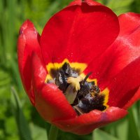 Кафе для пчелки: и поесть и отдохнуть. :: Владимир Безбородов