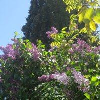 майское цветение в Крыму :: Елена