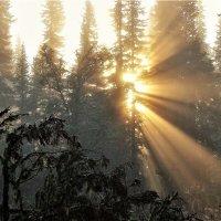 Солнце в дебрях :: Сергей Чиняев