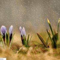 Тёплый майский дождь :: Юлия Игнатьевская