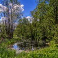 Дре́зна — река 2 :: Андрей Дворников