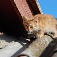 Дикий котёнок. :: Lara