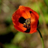 пчелиные будни) :: Дина Дробина