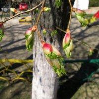 Весна! :: Larisa Pachkova