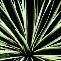 Растение :: Tanja Gerster