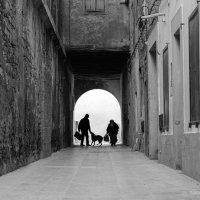 Собака :: Ксения Закружных