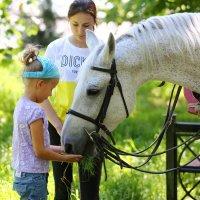Девочка и лошадь :: Анатолий Шулков