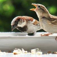 папаня, есть давай! :: linnud