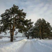 Зимний этюд :: Валентин Котляров