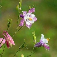 Лета нежные цветы. :: Юрий. Шмаков