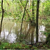Лесное болотце. :: Валерия Комова