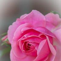 """Пройдемте в сад? - Я покажу Вас розам."" Ричард Шеридан :: Татьяна Bartel"