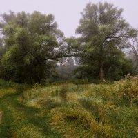 Утро-туман :: Андрей Бондаренко