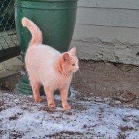Живет в Петергофе розовый кот ... :: Алексей Михалев