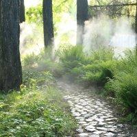 теневой сад :: Надежда Сальянова