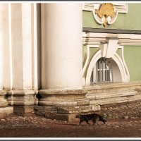 8 июня - Всемирный день петербургских котов и кошек :: muh5257