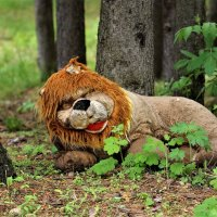 Старый брошенный лев :: Исаков Александр