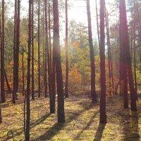 Осенний лес :: Виктор _