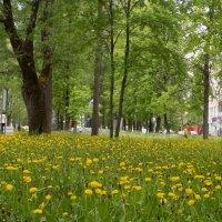 Золотые газоны провинции... :: Алена
