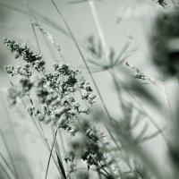 Летний ветер. :: Валерия  Полещикова
