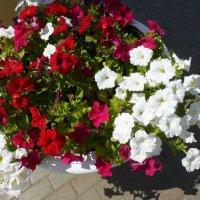 Цветы в Казанском Кремле :: Наиля