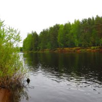 Река Чагодоща. :: ВАЛЕНТИНА ИВАНОВА