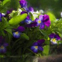 цветы в вазе :: Виктор Сосунов