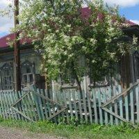 Старый деревенский покосившийся дом :: Наталья Петровна Власова