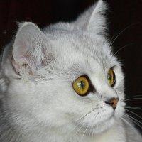 Моя прекрасная леди :: Людмила Селегенева