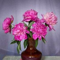 Розовые пионы :: Irina-77 Владимировна