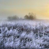 Островок туманного утра.... :: Андрей Войцехов