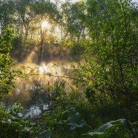 Солнечный рассвет с туманом :: Сергей Корнев