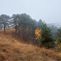 Осенний лес в горах :: Сергей Кокотчиков