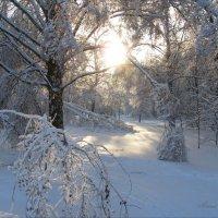Зимушка - Зима :: Анна Воробьева