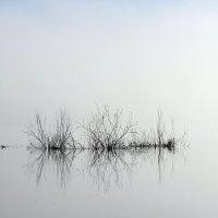 Туман :: Нина Бурченкова.