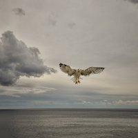 Над седой равниной моря... :: Александр Бойко